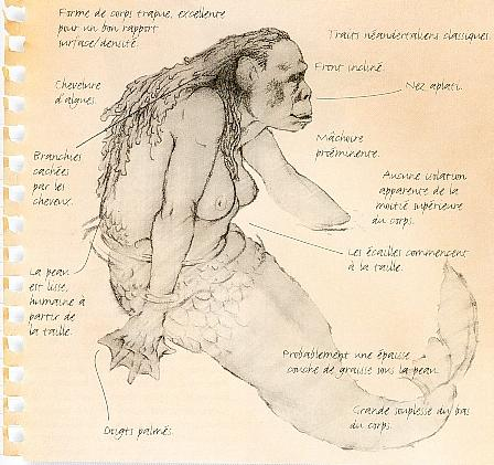 chimpanzé du congo mots flèches