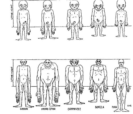 proportions of body. Changes in ody proportions